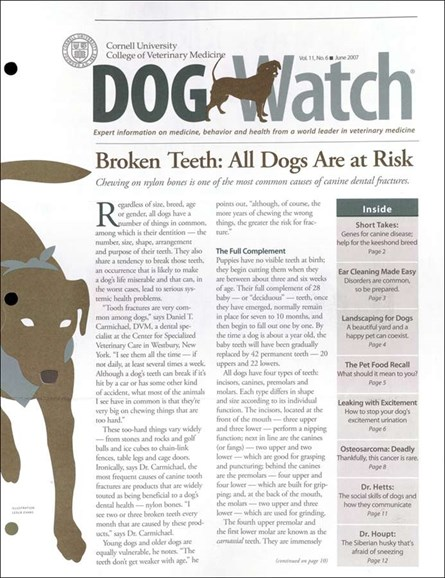 Dogwatch Cover - 6/1/2007
