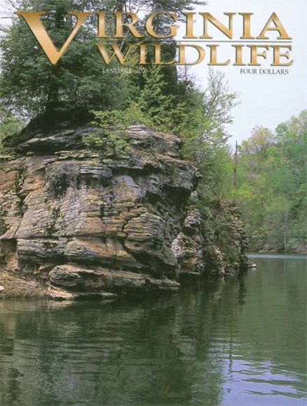 Virginia Wildlife Cover - 1/1/2008