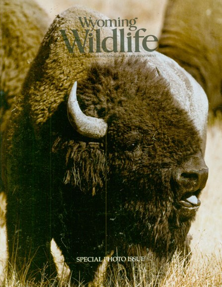 Wyoming Wildlife Cover - 4/1/2009