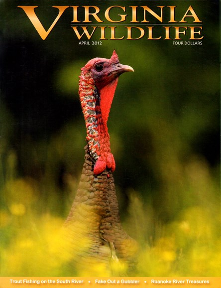 Virginia Wildlife Cover - 4/1/2012