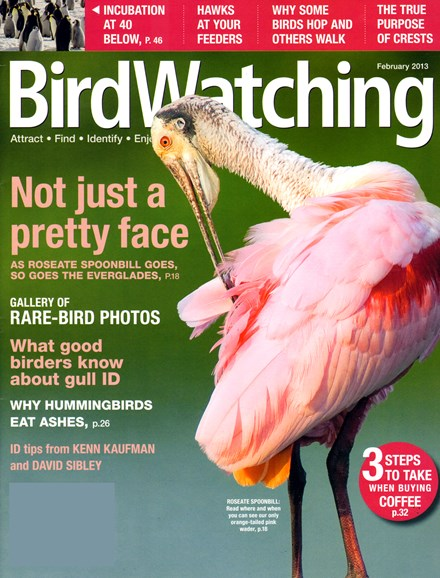 Bird Watching Cover - 2/1/2013