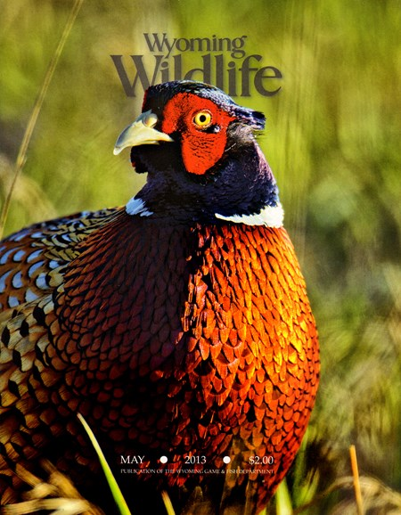 Wyoming Wildlife Cover - 5/1/2013