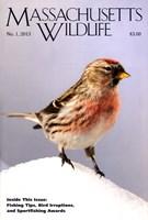 Massachusetts Wildlife 7/1/2013