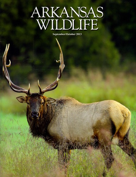 Arkansas Wildlife Cover - 9/1/2013