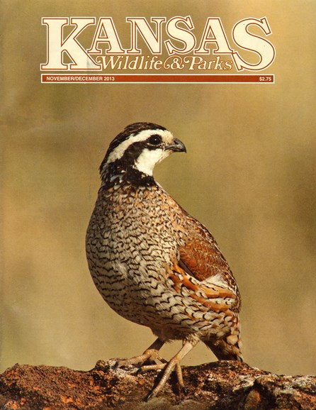 Kansas Wildlife & Parks Cover - 11/1/2013