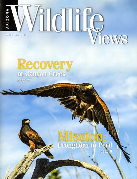 Arizona Wildlife Views Cover - 3/1/2014
