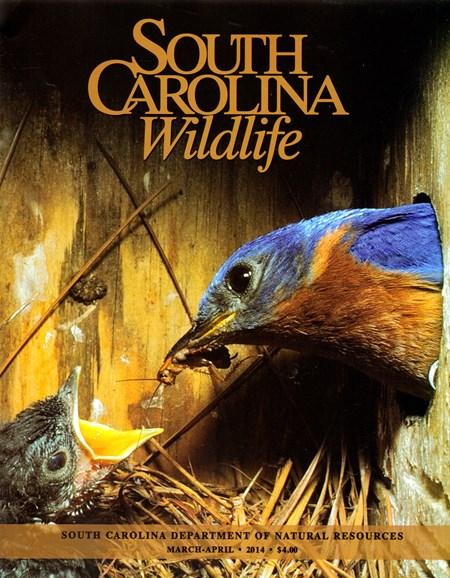 South Carolina Wildlife Cover - 3/1/2014
