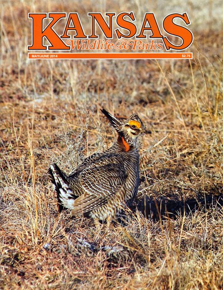 Kansas Wildlife & Parks Cover - 5/1/2014