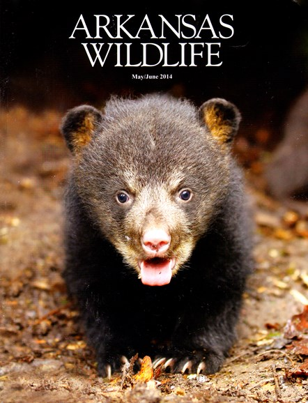 Arkansas Wildlife Cover - 5/1/2014
