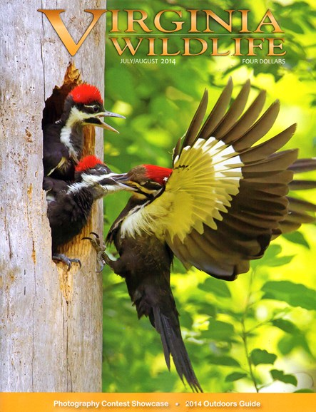 Virginia Wildlife Cover - 7/1/2014