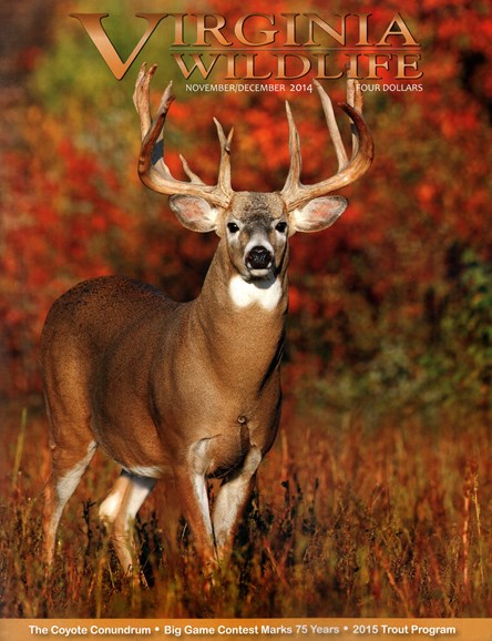 Virginia Wildlife Cover - 11/1/2014