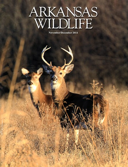 Arkansas Wildlife Cover - 11/1/2014