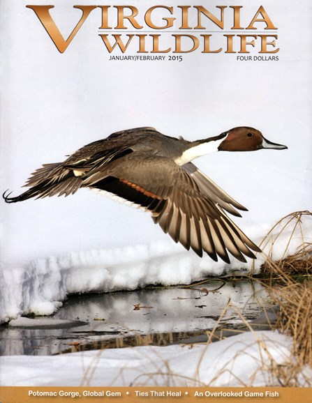 Virginia Wildlife Cover - 1/1/2015