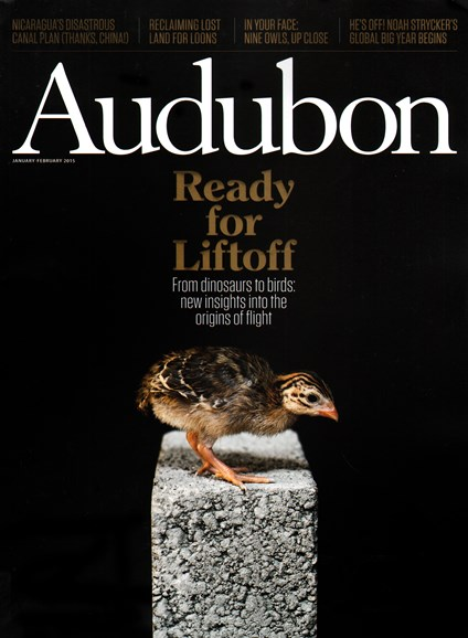 Audubon Cover - 1/1/2015