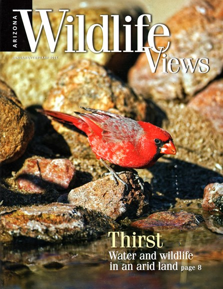 Arizona Wildlife Views Cover - 1/1/2015