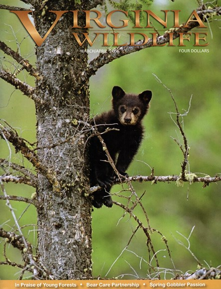 Virginia Wildlife Cover - 3/1/2015