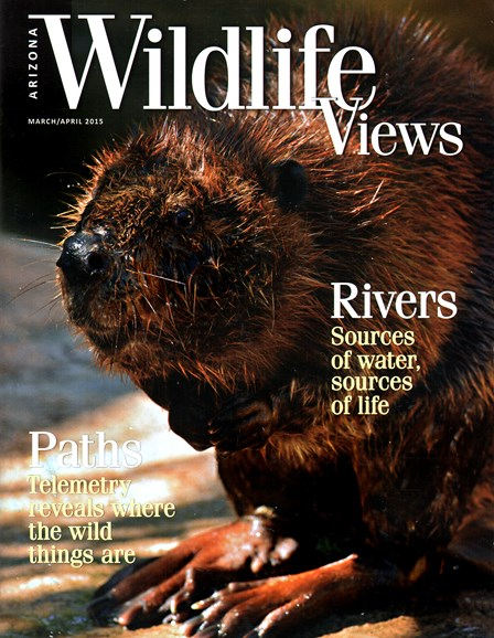 Arizona Wildlife Views Cover - 3/1/2015