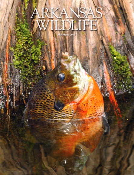 Arkansas Wildlife Cover - 5/1/2015