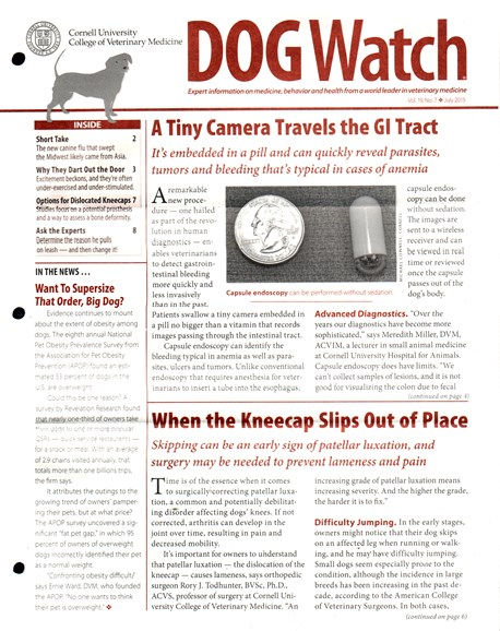 Dogwatch Cover - 7/1/2015