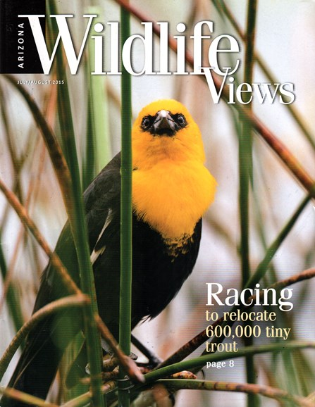 Arizona Wildlife Views Cover - 8/1/2015