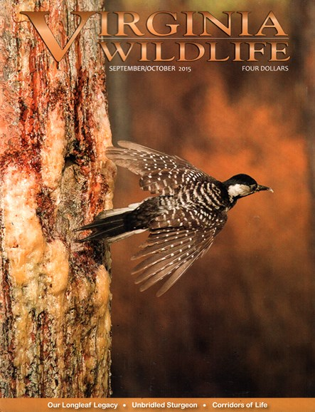 Virginia Wildlife Cover - 9/1/2015
