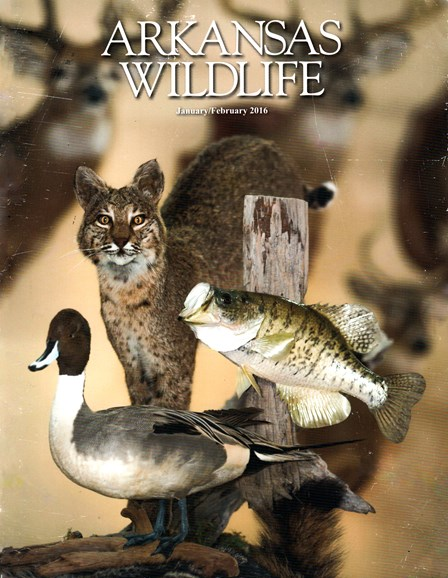 Arkansas Wildlife Cover - 1/1/2016