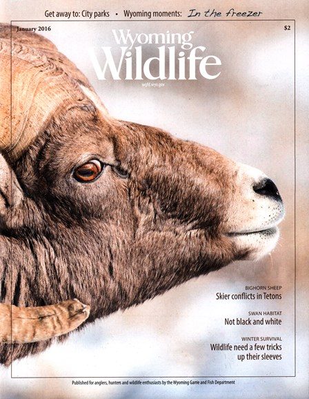 Wyoming Wildlife Cover - 1/1/2016