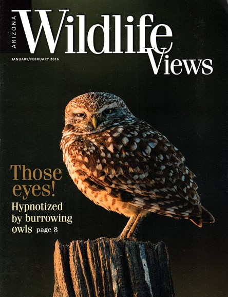 Arizona Wildlife Views Cover - 1/1/2016