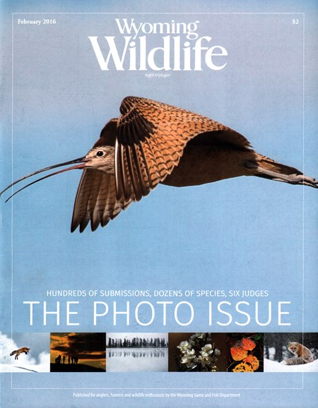 Wyoming Wildlife Cover - 2/1/2016