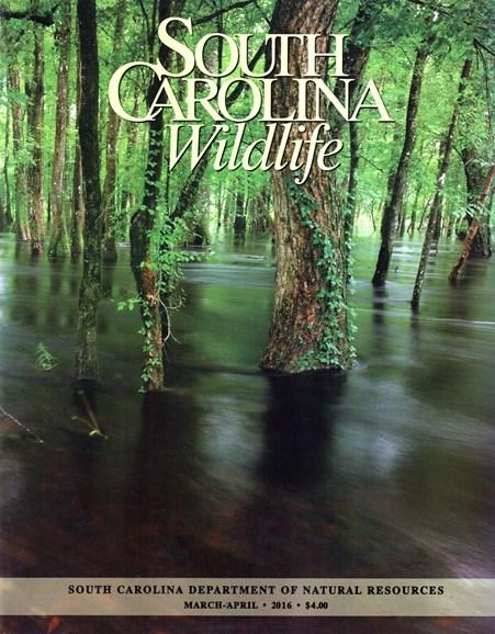 South Carolina Wildlife Cover - 3/1/2016