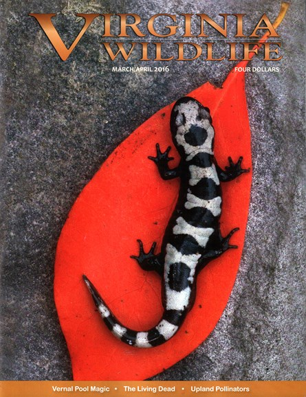 Virginia Wildlife Cover - 3/1/2016