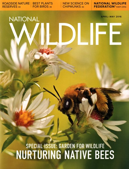 National Wildlife Cover - 4/1/2016