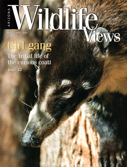 Arizona Wildlife Views Cover - 3/1/2016