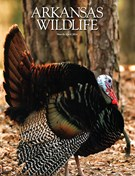 Arkansas Wildlife Magazine 3/1/2016
