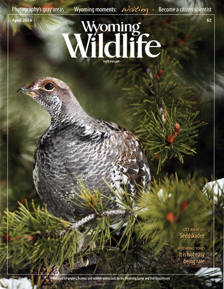 Wyoming Wildlife Cover - 4/1/2016
