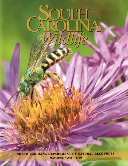 South Carolina Wildlife Cover - 5/1/2016