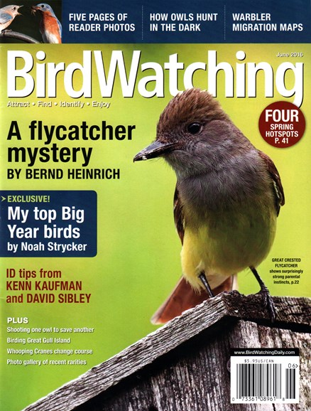 Bird Watching Cover - 6/1/2016