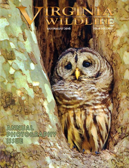 Virginia Wildlife Cover - 7/1/2016