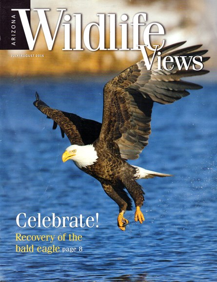 Arizona Wildlife Views Cover - 7/1/2016