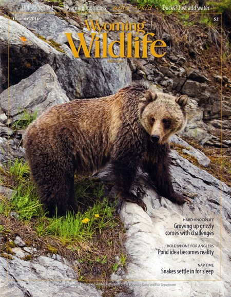 Wyoming Wildlife Cover - 10/1/2016