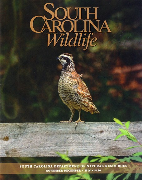 South Carolina Wildlife Cover - 11/1/2016
