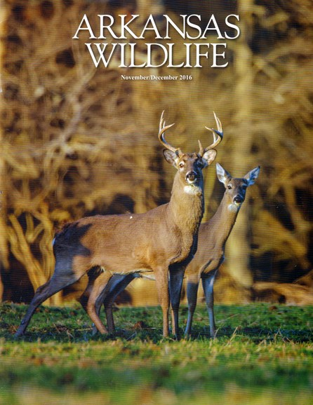 Arkansas Wildlife Cover - 11/1/2016