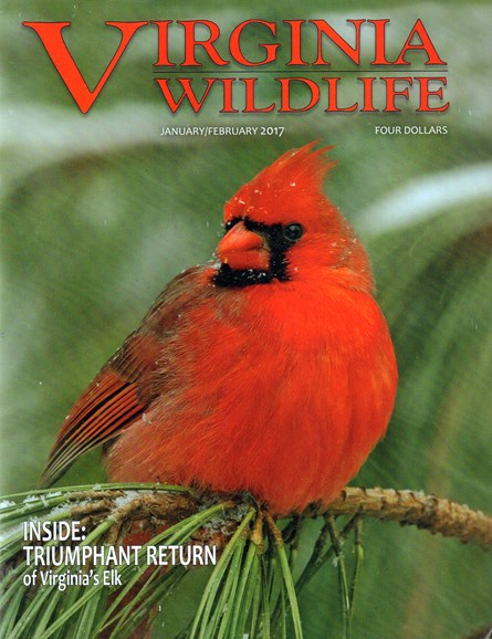 Virginia Wildlife Cover - 1/1/2017