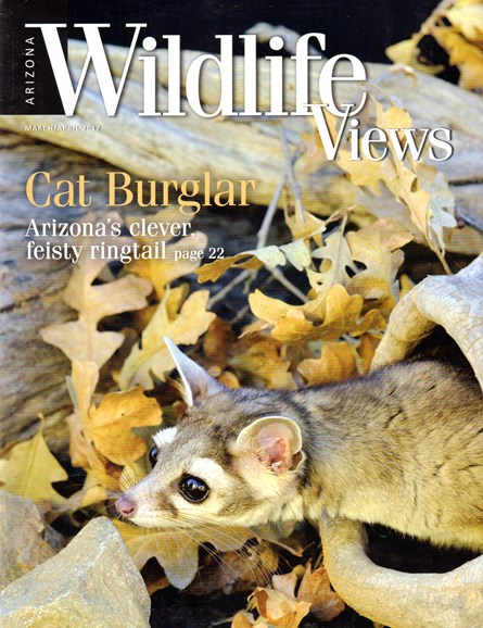 Arizona Wildlife Views Cover - 3/1/2017