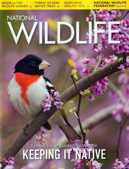 National Wildlife Cover - 4/1/2017