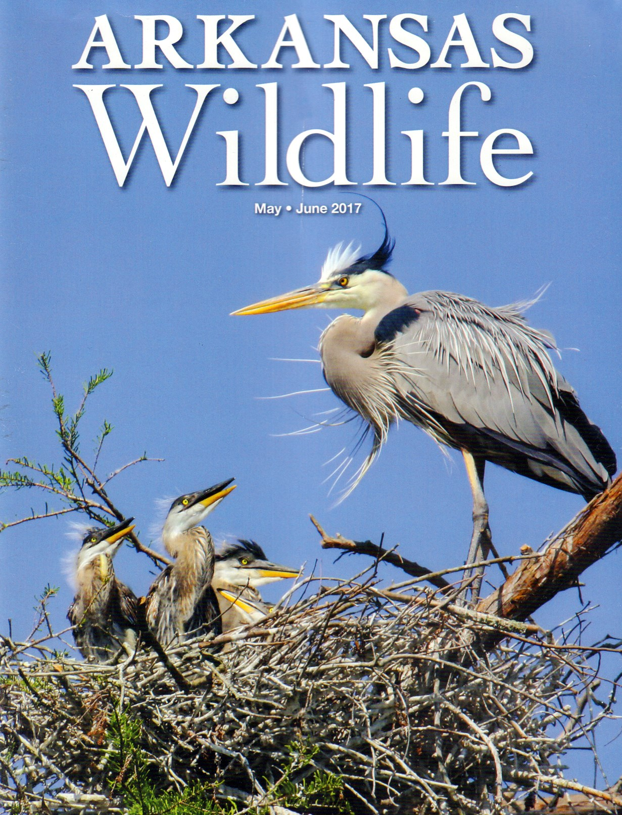 Best Price for Arkansas Wildlife Magazine Subscription