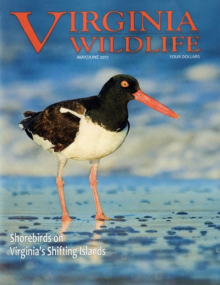 Virginia Wildlife Cover - 5/1/2017