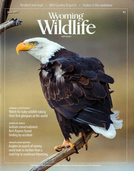 Wyoming Wildlife Cover - 6/1/2017