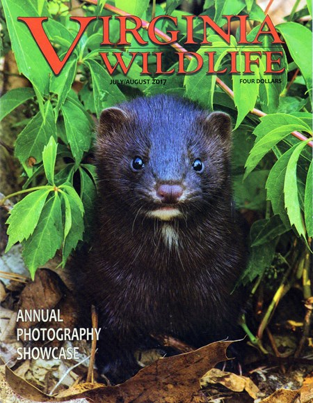 Virginia Wildlife Cover - 7/1/2017
