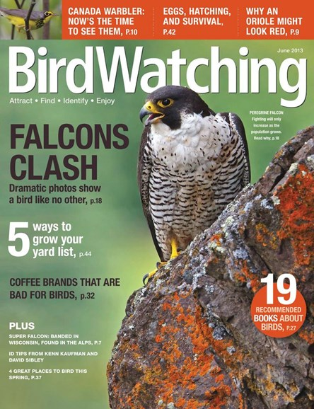Bird Watching Cover - 6/1/2013